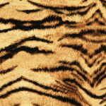 El Tigre, is a favorite by our animal print lovers and is used in numerous projects and applications.